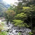 入鴨地区の水際の風景。川と木々の景色が素晴らしい。