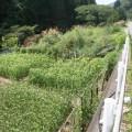 アワやキビ他多様な植物があり生活の営みを感じさせる。